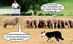 Click image for larger version.  Name:sheep.jpg Views:42 Size:58.9 KB ID:7177