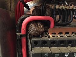 Click image for larger version.  Name:snake.jpg Views:295 Size:59.5 KB ID:6436