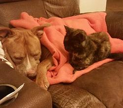 Click image for larger version.  Name:dog1.jpg Views:206 Size:50.6 KB ID:5946