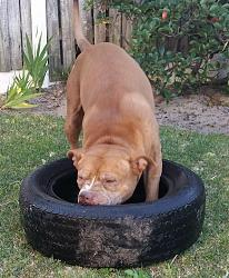 Click image for larger version.  Name:Dog2.jpg Views:295 Size:62.2 KB ID:5947